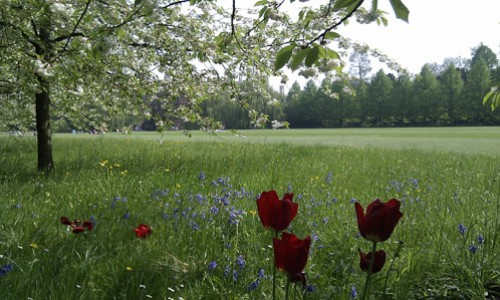 Meadow Behind Claire College