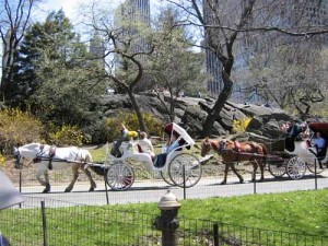 Horse & Carriage rides in Central Park