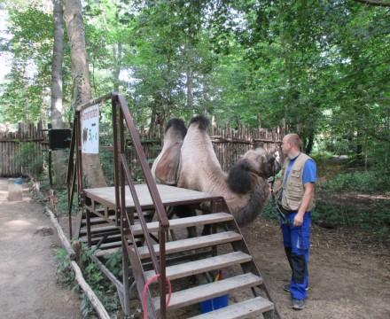 Leipzig Zoo Camel Rides