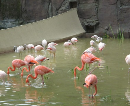 Leipzig Zoo Flamingos