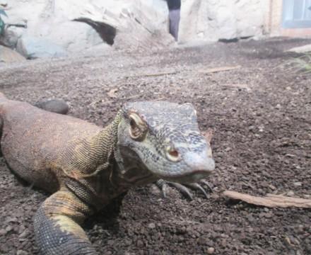 Leipzig Zoo Lizard