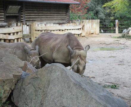 Leipzig Zoo Rhino