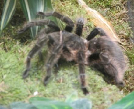 Leipzig Zoo Spider